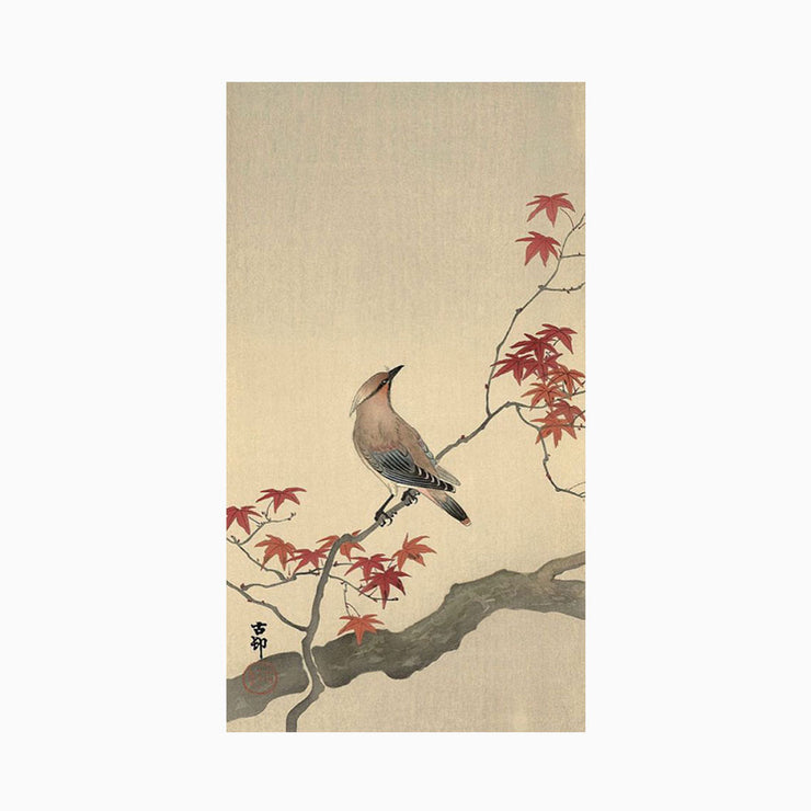 Japanese Waxwing on Maple, 1900-1936 - Objects of Interest