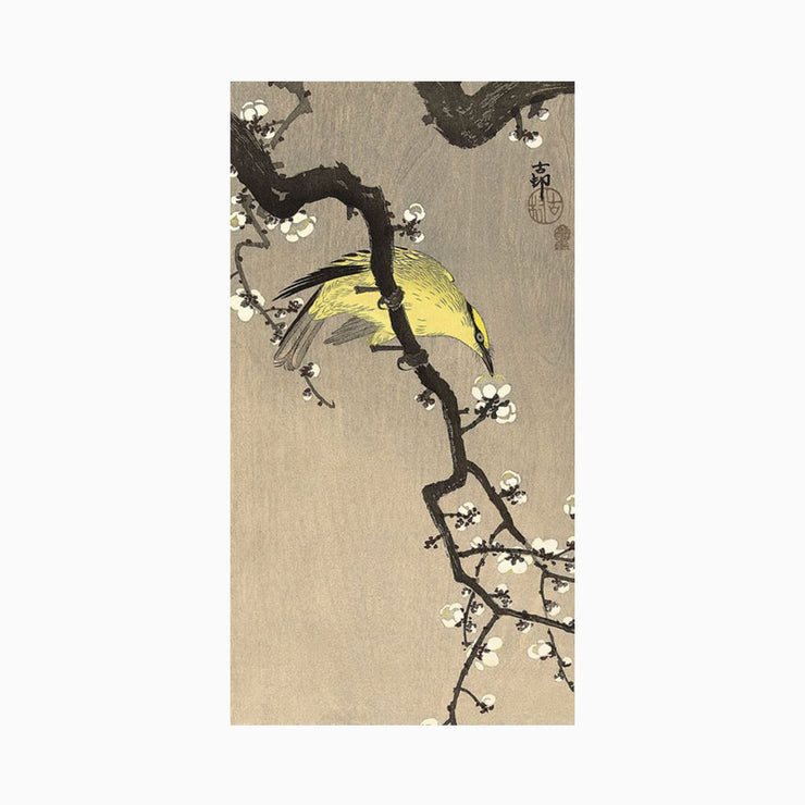 Chinese Wielewaal on Plum Blossom Branch, 1900-1910 - Objects of Interest