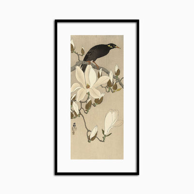 Myna on Magnolia Branch, 1900-1910 - Objects of Interest