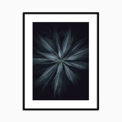Star Flower - Objects of Interest
