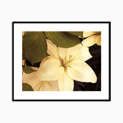 Lily and Leaves - Objects of Interest