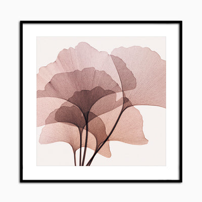 Gingko Leaves II - Objects of Interest