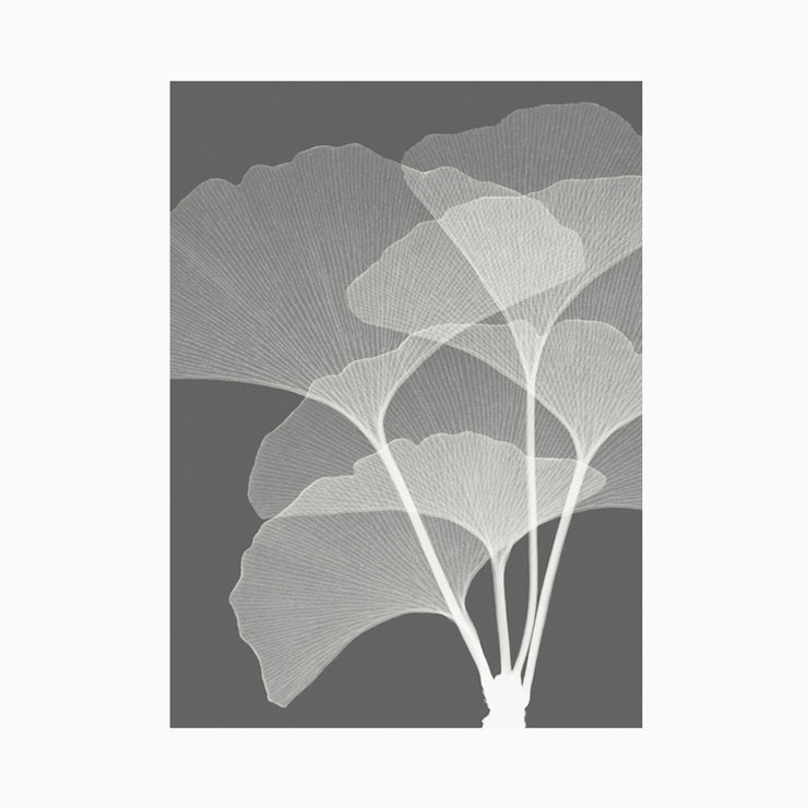 Gingkos I - Objects of Interest