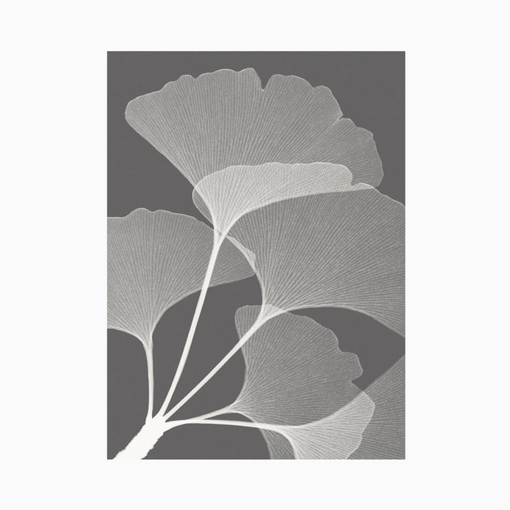 Gingkos II - Objects of Interest