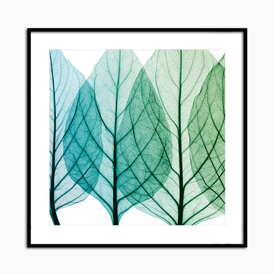 Celosia Leaves I - Objects of Interest