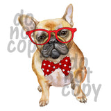 French Bulldog Boy - Dye Sub Heat Transfer Sheet