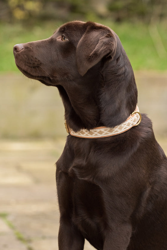 Glaze & Gordon Teesdale Collar