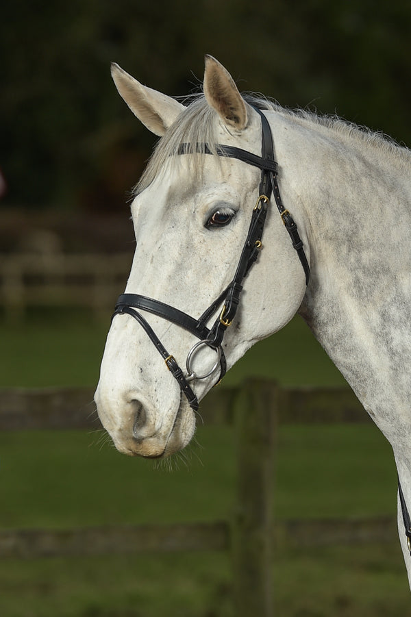 Glaze & Gordon Flat Cavesson Noseband with Flash