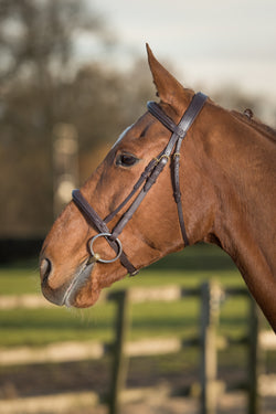 Glaze & Gordon Luxury Raised Cavesson Noseband