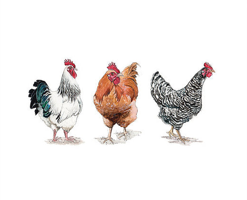 Sophie Botsford Trio of Chickens Greetings Card