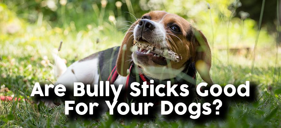 Are Bully Sticks Good For Dogs?