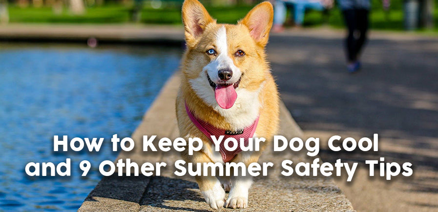 How to Keep Your Dog Cool and 9 Other Summer Safety Tips