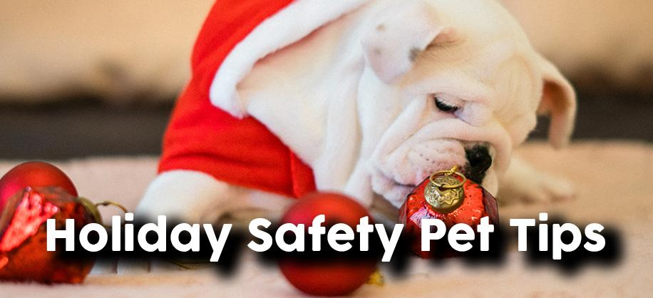 Holiday Pet Health Tips