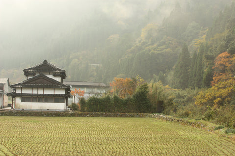 Furuichi's house and tea fields.