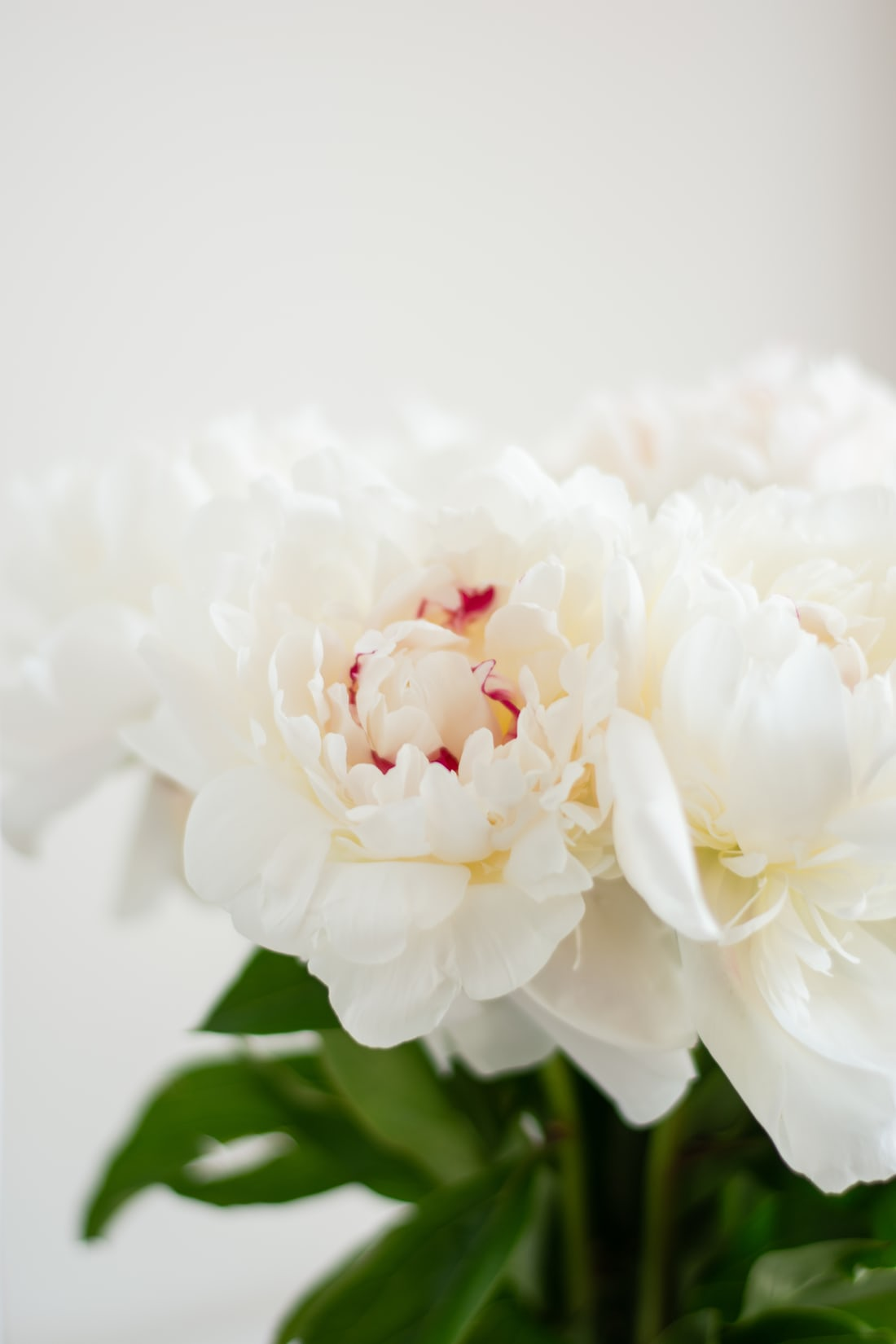 FRESH CUT PEONIES IN ROUND BOX