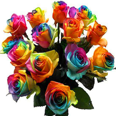 RARE LIMITED EDITION Rainbow Rose 100 Seeds