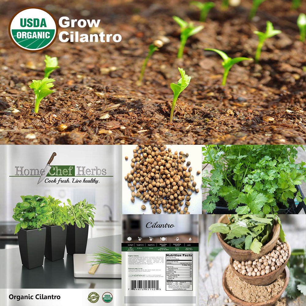 Chefs buying fresh herbs - Usda Organic Culinary Collection Of Herb Seeds Best Seller
