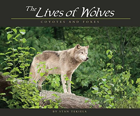 Lives of Wolves, Coyotes and Foxes (Wildlife Appreciation)