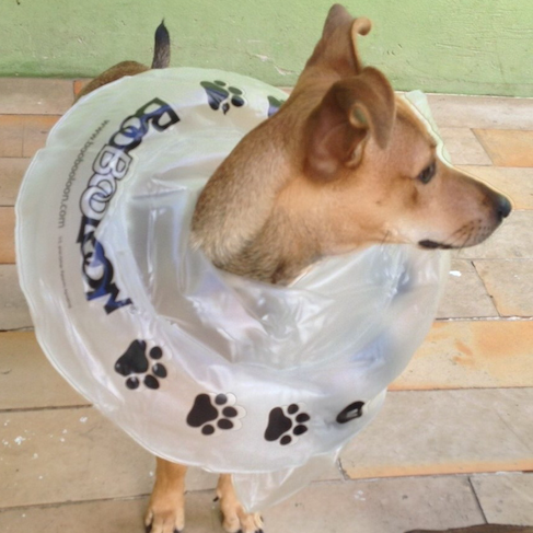 BooBooLoon - Pet Recovery Collar