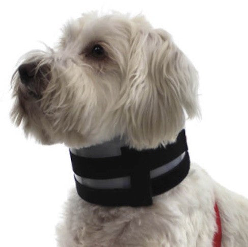 Bite Not - Pet Recovery Collar