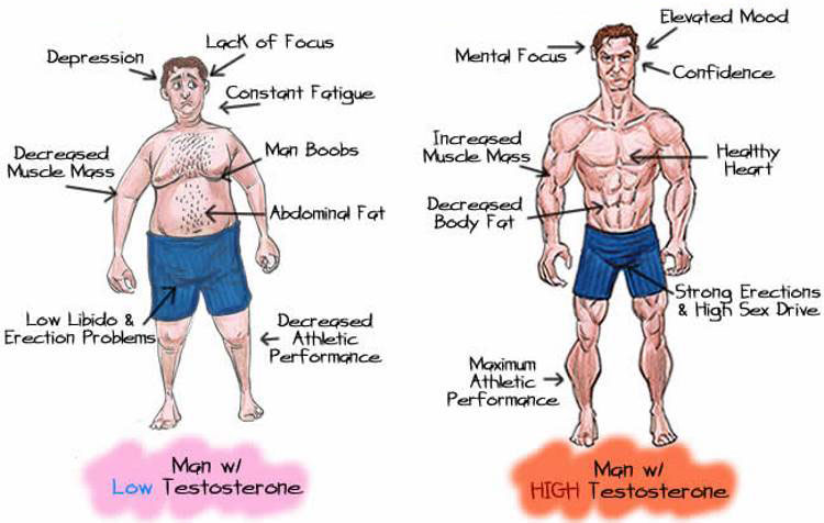 Sex increases testostrone for building muscle