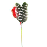 Red Wild Turkey Wing Feather Toy