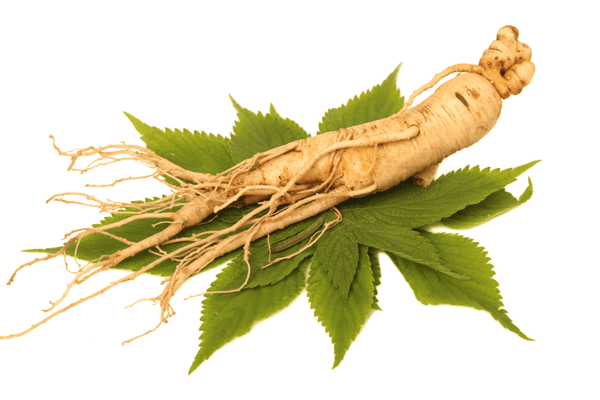 Ginseng for fatigue relief