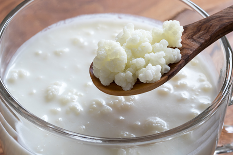 kefir probiotic foods for weight loss