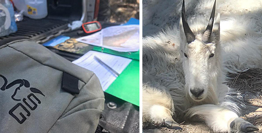RMGA Goat Survey
