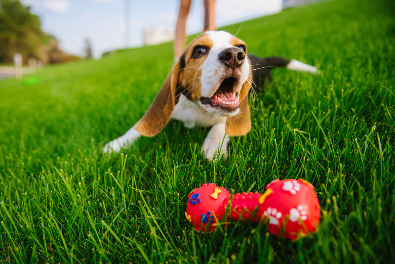 How to Choose the Best Toys for Puppies