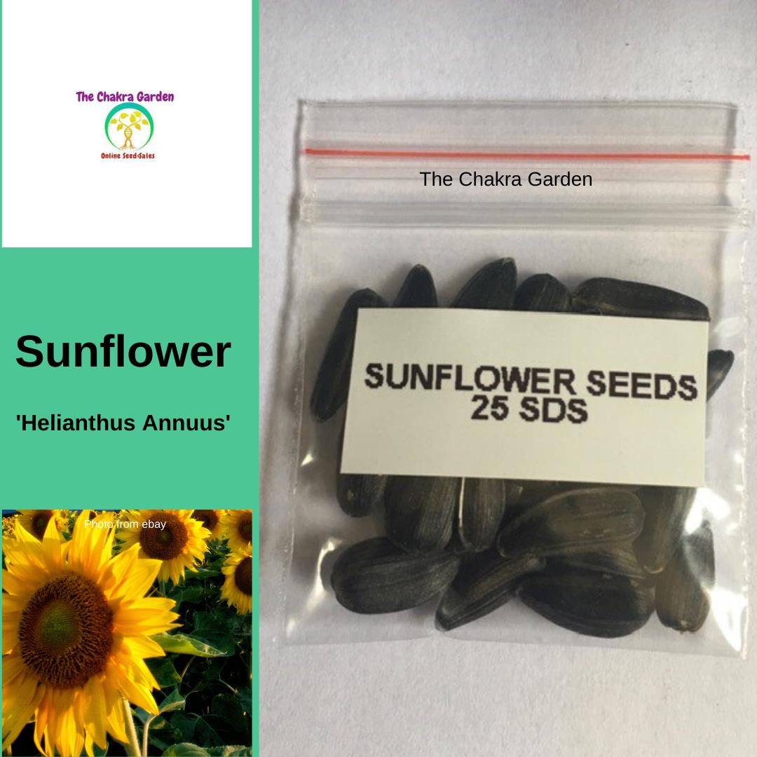 Sunflower - 'Helianthus Annuus' - 25 Seeds - EDIBLE FLOWERS - Solar Plexus Chakra