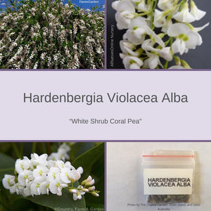 "Hardenbergia Violacea Alba ""White Shrub Coral Pea""-BUY IN BULK-seeds"