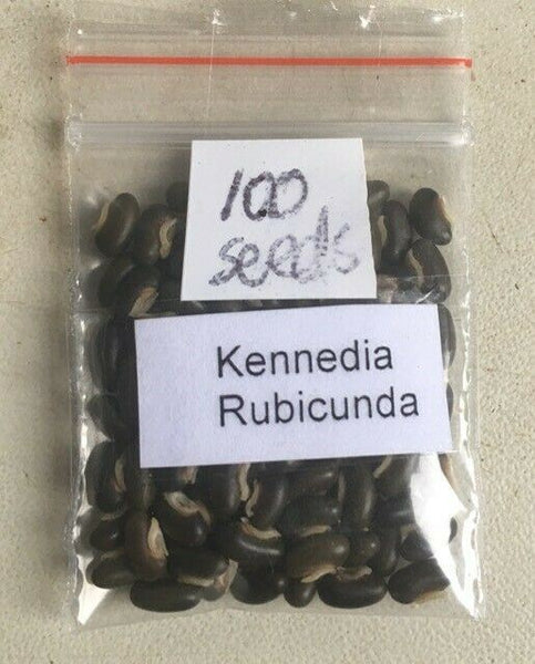 "Kennedia Rubicunda ""Dusky Coral Pea"" seeds - buy in BULK and save"
