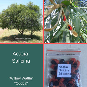 "Acacia Salicina ""Cooba"" ""Willow Wattle"" Seeds"