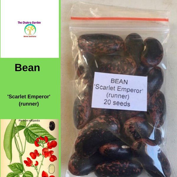 Bean 'Scarlet Emperor' (Runner) Vegetable-20 Seeds-Base Chakra
