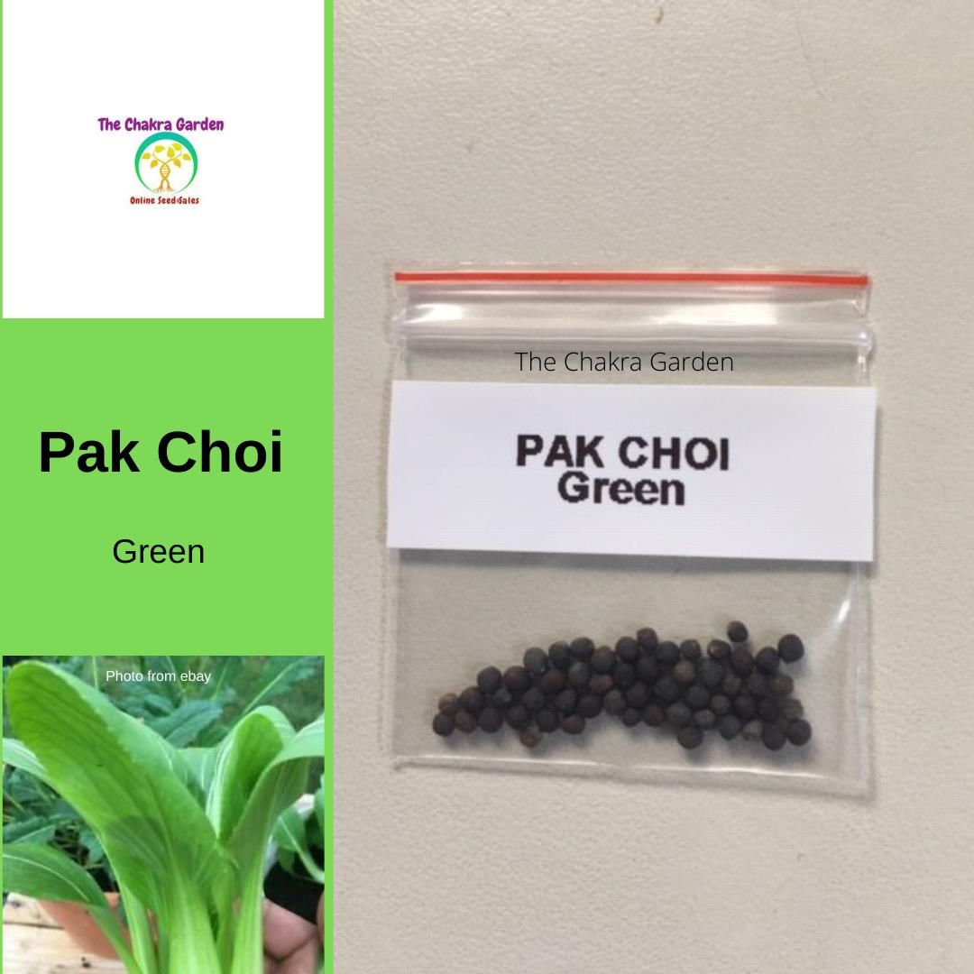 Pak Choi Green - Vegetable - 50 Seeds Heart Chakra