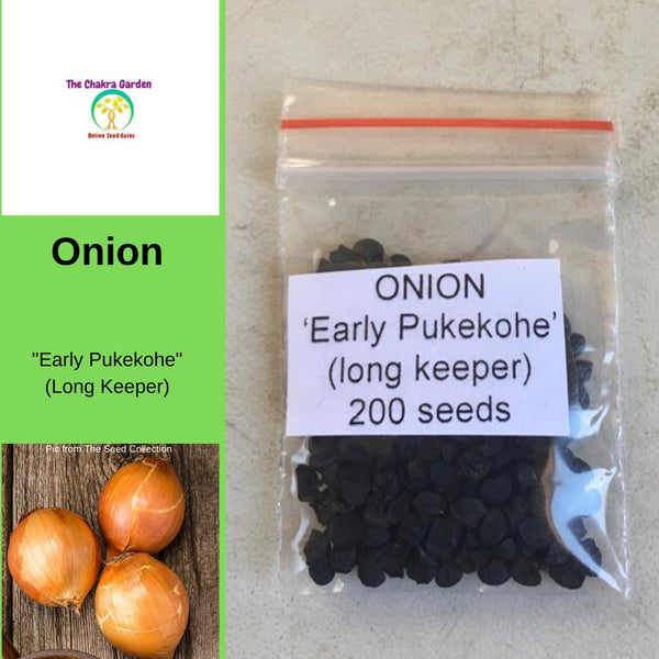 Onion 'Early Pukekohe' (Long Keeper) - Vegetable - 200 Seeds Crown Chakra
