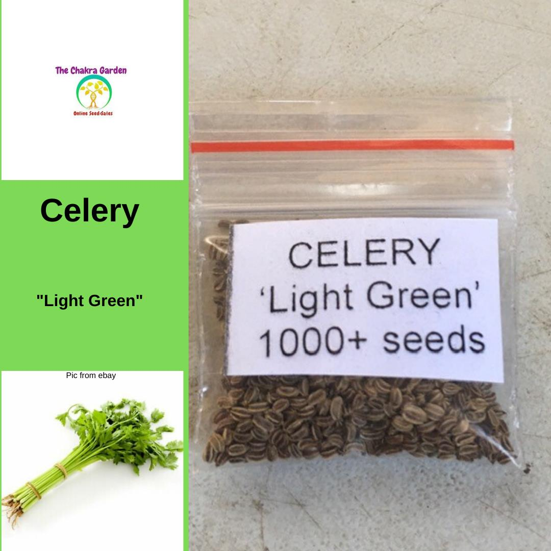 Celery 'Light Green' - Vegetable - 1000+ Seeds Heart Chakra