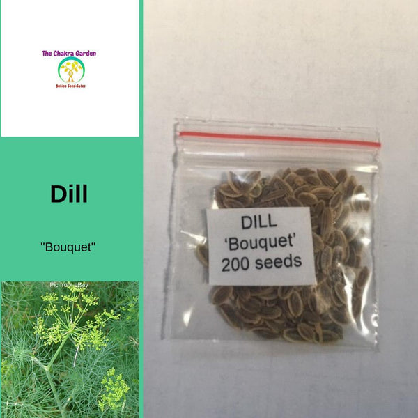 Dill 'Bouquet' - Vegetable - Herbs - 200 Seeds - Solar Plexus Chakra
