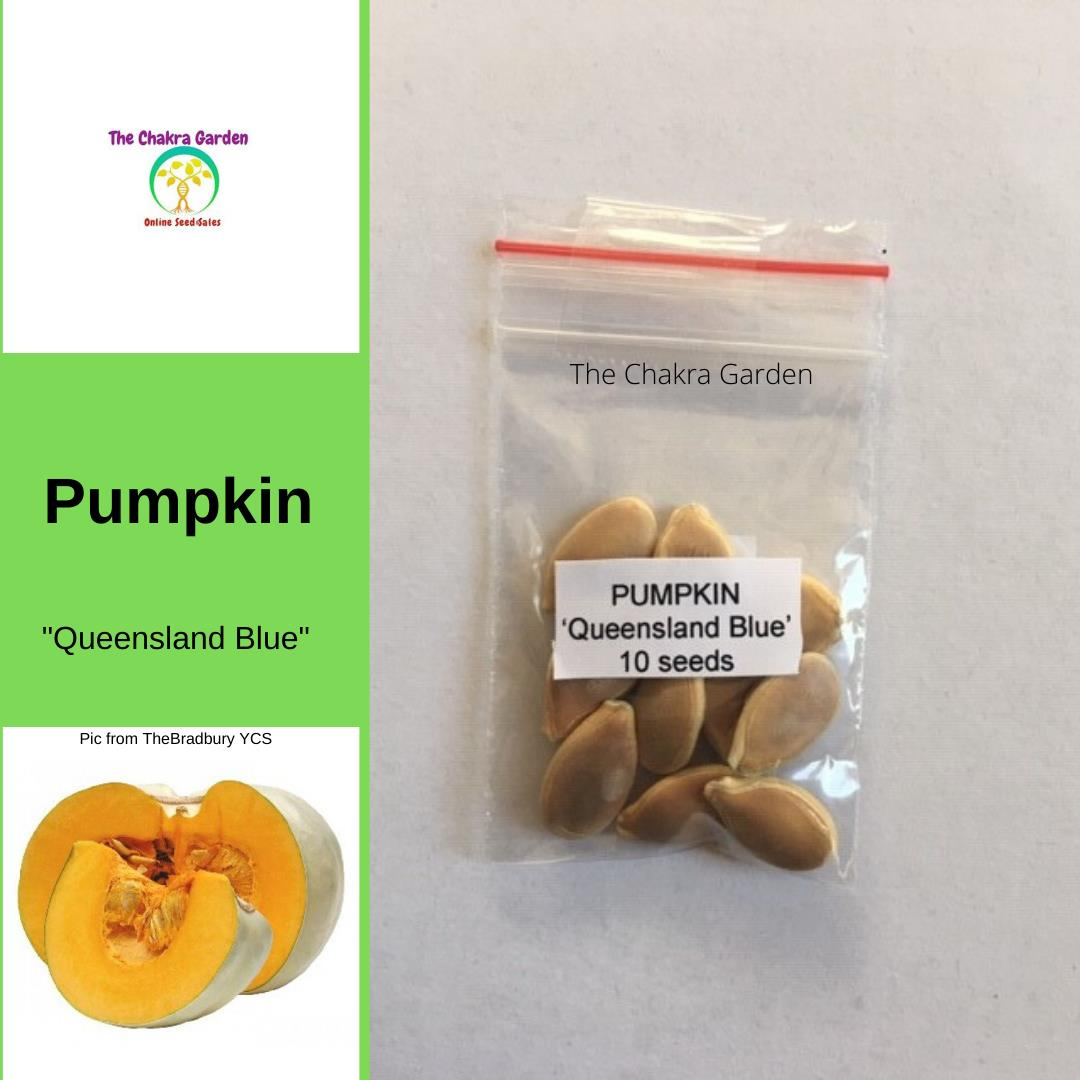 Pumpkin 'Queensland Blue'-Vegetable-10 Seeds-Sacral Chakra
