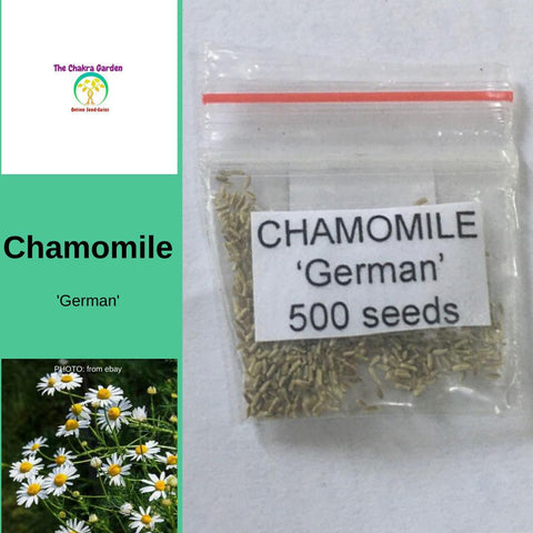 Chamomile 'German' Herbs- Edible Flowers-Solar Plexus- 500 SEEDS