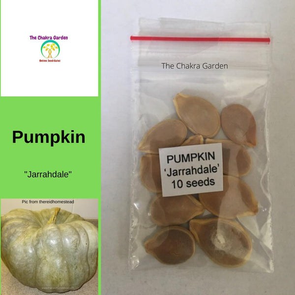Pumpkin 'Jarrahdale' - Vegetable - 10 Seeds - Sacral Chakra