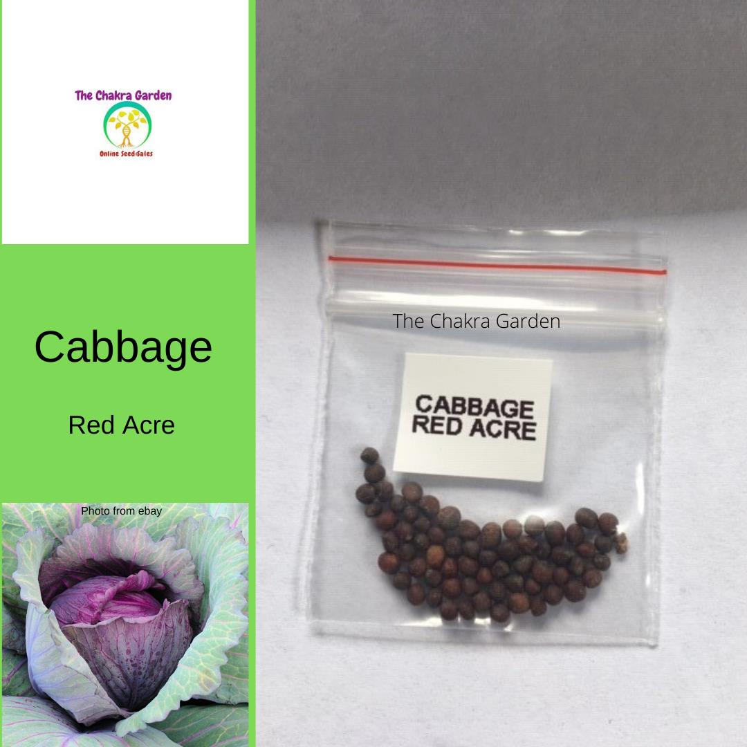 Cabbage 'Red Acre' - 50 Seeds - Vegetable Seeds - Crown Chakra