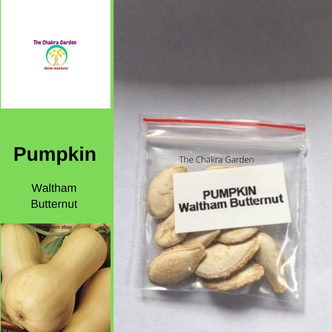 Pumpkin 'Waltham Butternut' - 10 Seeds - Vegetable Seeds - Sacral Chakra