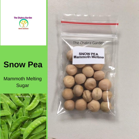 Snow Pea 'Mammoth Melting Sugar'-Vegetable-20 Seeds-Heart Chakra