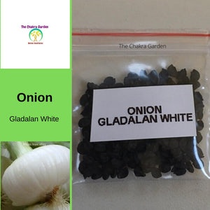 Onion 'Gladalan White' - 200 Seeds - Vegetable Seeds - Crown Chakra