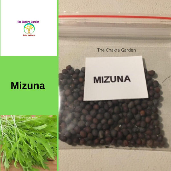 Mizuna 'Japanese Mustard' - VEGETABLES - 200 Seeds - Heart Chakra
