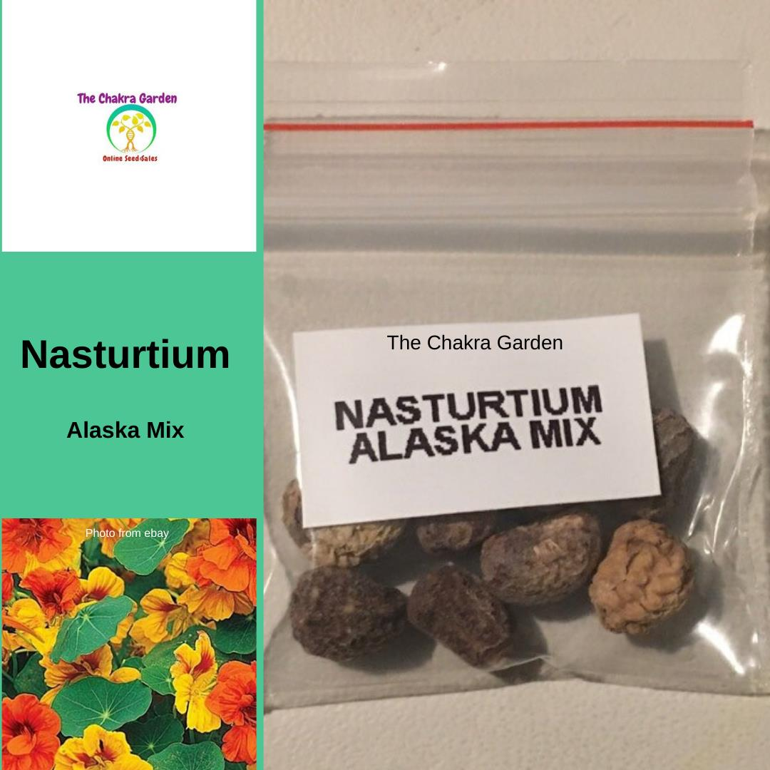 Nasturtium 'Alaska Mix' - 10 Seeds - Edible Flowers Seeds - Sacral Chakra