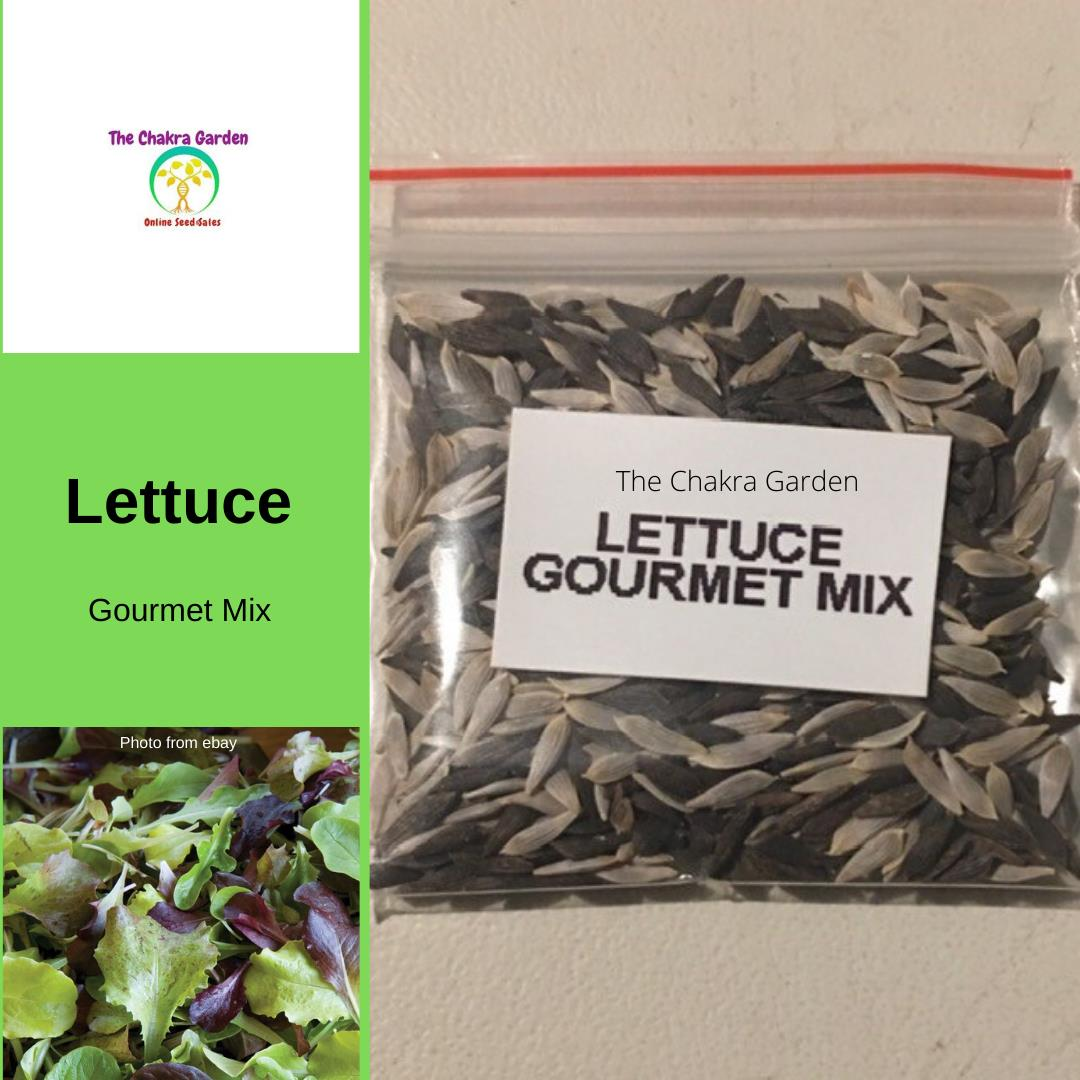 Lettuce 'Gourmet Mix' - Vegetable- 1000+ Seeds - Heart Chakra
