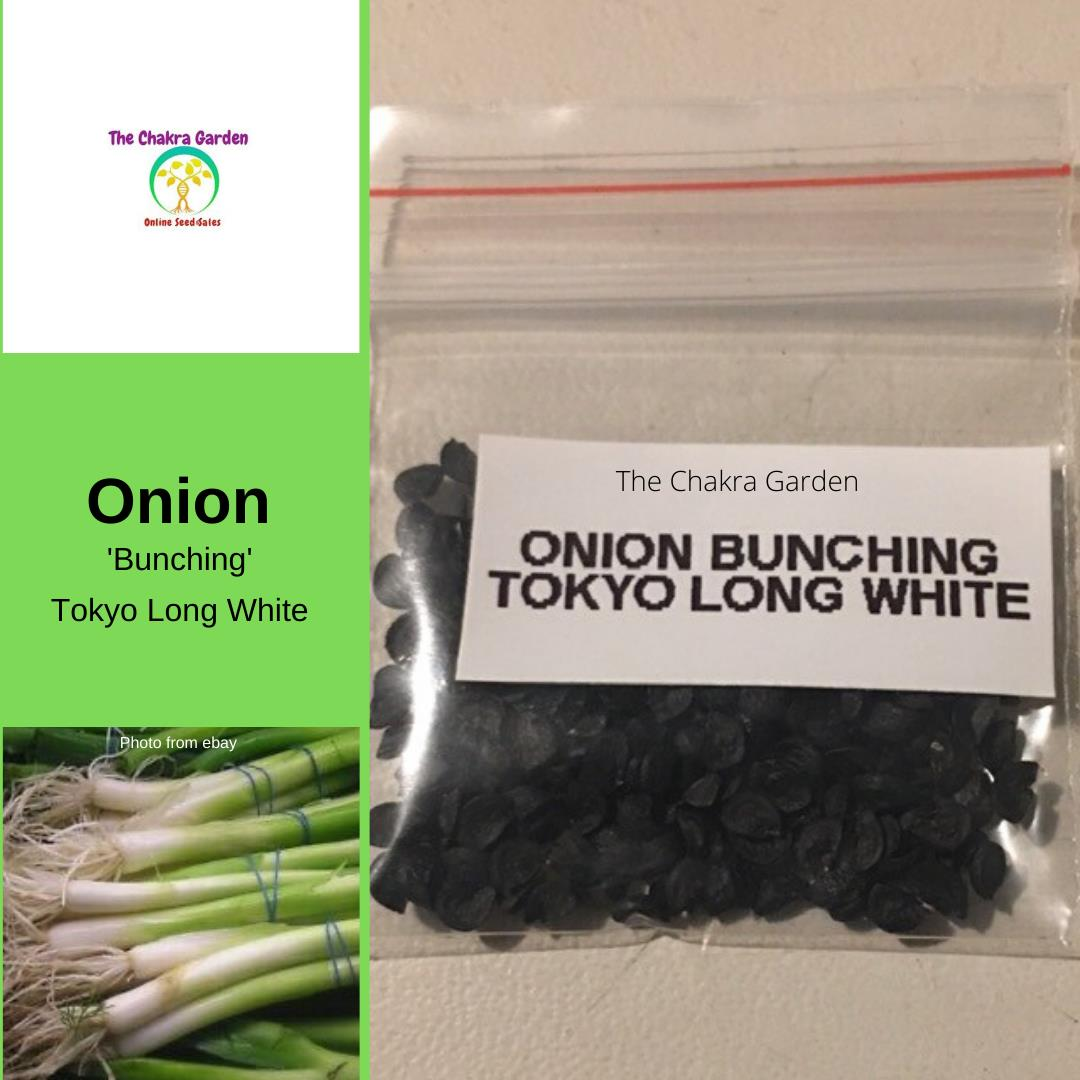 Onion Bunching 'Tokyo Long White' - 200 Seeds - Vegetable Seeds - Crown Chakra